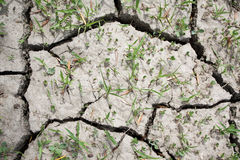 треснутый parched район неорошаемого земледелия засухи Стоковые Изображения