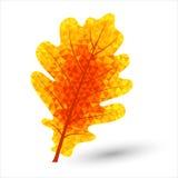 Триангулярные лист дуба Стоковые Изображения
