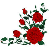 Триангулярный состав много роз Стоковое Изображение