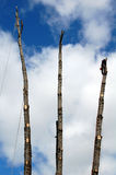 Триммеры дерева - резцы стоковое фото rf
