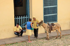 Тринидад, Куба - эскиз жанра с ослом Стоковые Фотографии RF