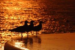 трио моря poolside чаек стоковое фото