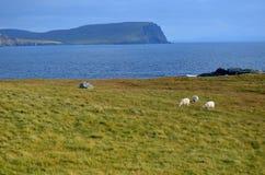 Трио пасти овец на этап Neist в Шотландии Стоковое Фото