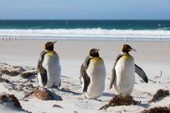 Трио пингвина короля на пляже Стоковая Фотография