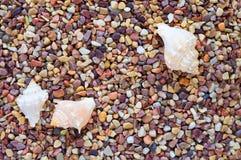 трио раковины моря камушков Стоковая Фотография RF