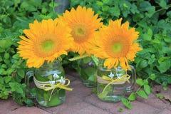 Трио расположений солнцецвета Стоковое фото RF