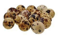 триперстки группы яичек Стоковые Фотографии RF