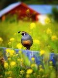 Триперстки на загородке Стоковое Фото