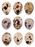 Триперстки egg Стоковое фото RF