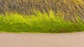 Триппель пляжа мурены. Стоковое Изображение RF