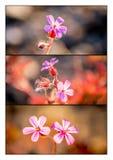 Триптих полевых цветков стоковое изображение