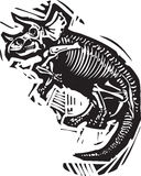 Трицератопс ископаемое Стоковые Изображения RF
