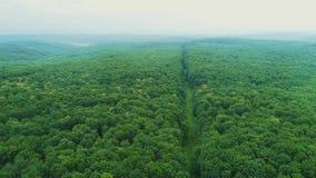 Тропа атмосферы сезона осени вида с воздуха красочная предыдущая в туманном лесе 4K горной цепи видеоматериал