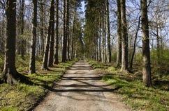Тропа выровнянная деревом Стоковое Изображение