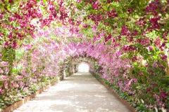 Тропа в ботаническом саде при орхидеи выравнивая путь Стоковое фото RF
