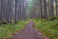 Тропа в древесинах стоковое фото
