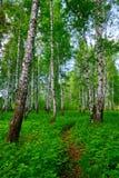 Тропа в лесе лета в неизвестном расстоянии Стоковые Изображения