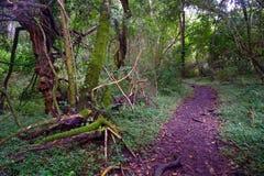Тропа в лесе - Южная Африка Стоковая Фотография RF