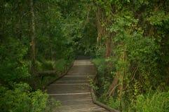 Тропа в джунглях стоковое фото rf