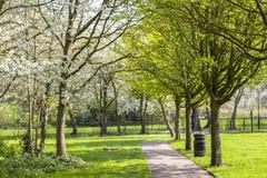 Тропа в зацветенном парке Зеленые и цветя деревья Яркое gozon Мусорный бак в парке стоковое фото