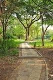 Тропа в зеленом парке стоковая фотография