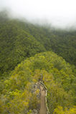 Тропа в зеленом лесе с туманом Канарские острова tenerife Испания Стоковые Фото