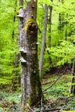 Тропа в зеленом лесе Стоковая Фотография