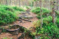 Тропа в лесе предусматривана с корнями дерева Стоковые Фото