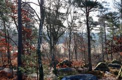 Тропа в лесе Фонтенбло стоковые изображения rf