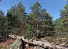 Тропа в лесе Фонтенбло стоковое изображение