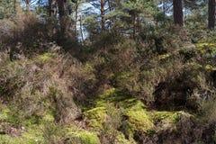 Тропа в лесе Фонтенбло стоковые фотографии rf