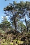 Тропа в лесе Фонтенбло стоковая фотография rf