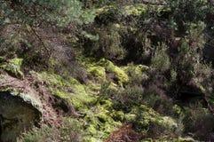 Тропа в лесе Фонтенбло стоковое изображение rf