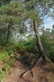 Тропа в национальном лесе француза pignons trois стоковая фотография rf