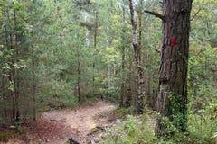 Тропа в национальном лесе француза pignons trois стоковые изображения