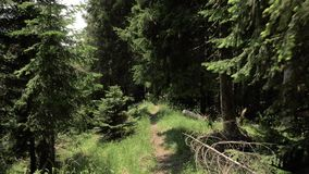 Тропа в национальном парке Borjomi Kharagauli - Georgia гор сток-видео