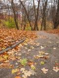 Тропа в парке в осени Стоковые Фото