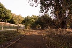 Тропа в парке стоковое изображение