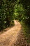 Тропа в древесинах Стоковое Изображение RF