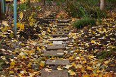 Тропа в упаденных желтых листьях Стоковое Изображение RF