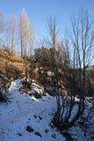 Тропа в Komna Стоковая Фотография RF