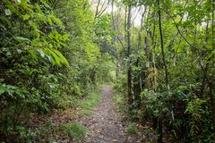 Тропа горы в Темзе Новой Зеландии стоковые фотографии rf