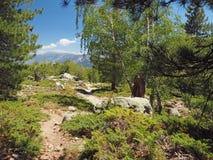Тропа горы пейзажа в луге на corsician alpes с большим Стоковое Фото