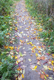 Тропа грязи засорянная с листьями осени Стоковые Изображения