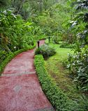 тропа джунглей Стоковая Фотография