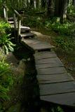 Тропа леса деревянная Стоковые Изображения RF