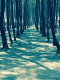 Тропа леса пляжа Стоковое Фото