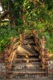 Тропа джунглей Стоковые Изображения
