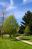 Тропа замотки в парке Стоковые Изображения RF