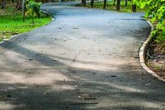 Тропа и природа дерева в саде Стоковые Фото